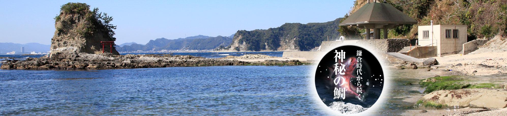 鯛ノ浦周辺の観光情報